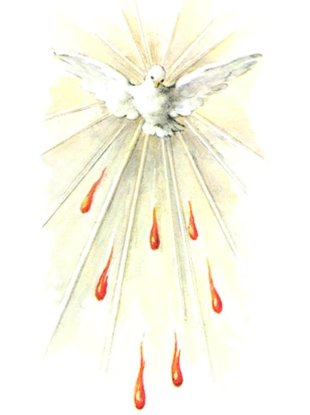 Dove Picture